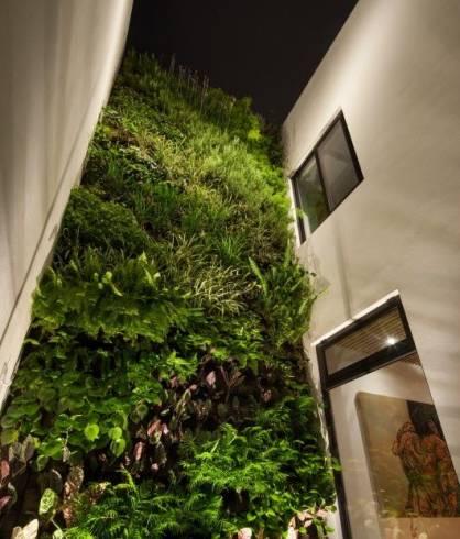 Muro verde como fazer