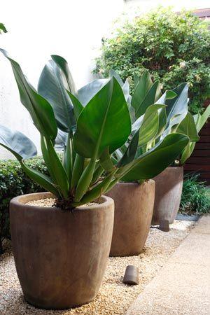 9 plantas para jardim de inverno projetos e dicas for Plantas para dentro de casa sombra