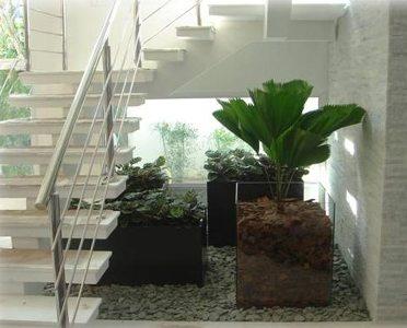 plantas de sombra para interior