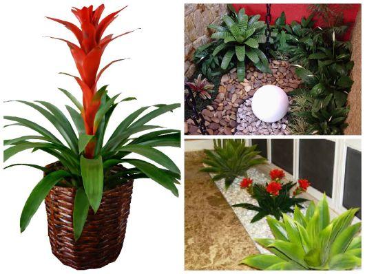 9 plantas para jardim de inverno projetos e dicas - Flores de sombra ...
