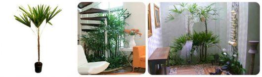planta ráfis decoração interna