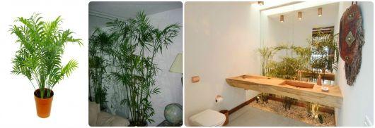 palmeira para enfeitar casa