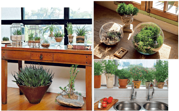 Fotos de vasos decorativos para cozinha - plantas e flores