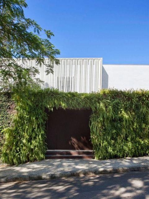 muro com samambaias