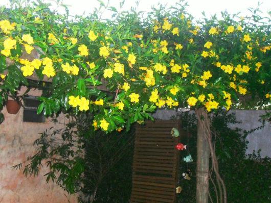 trepadeira com flor amarela