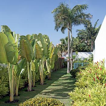 jardim com bananeira