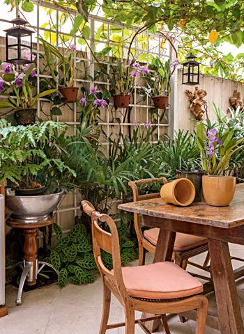muro com orquídeas