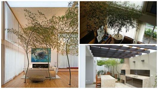 planta decorativa bambu mosso