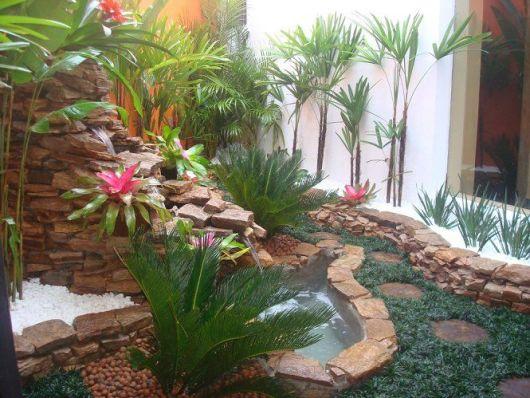 palmeira rafis na área externa