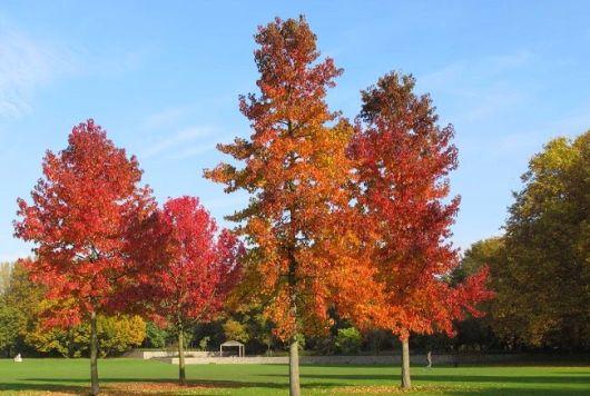 árvore que cai folhas