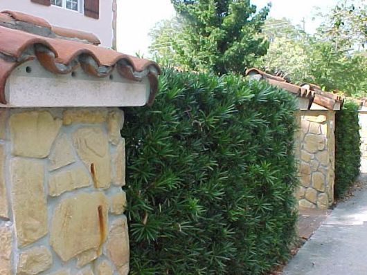 muro com planta