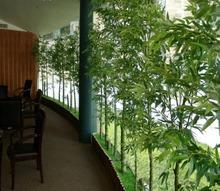 varanda com planta