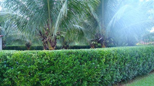 jardim com coqueiros