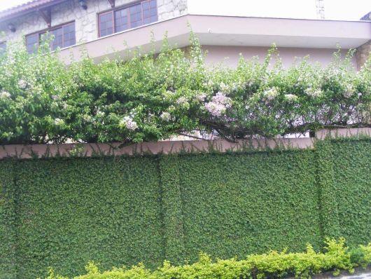 muro com plantas e flores
