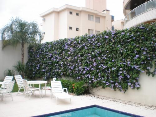 muro com tumbérgia