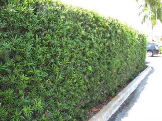cercado de planta verde