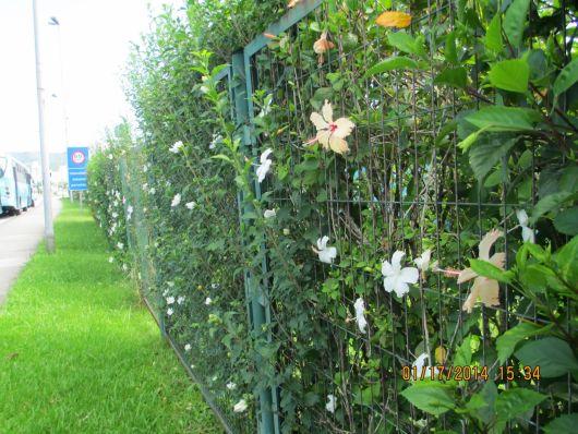 muro com hibiscos