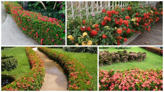 CERCA VIVA plantas verdes e com flores!