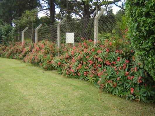 alambrado com planta espinhosa