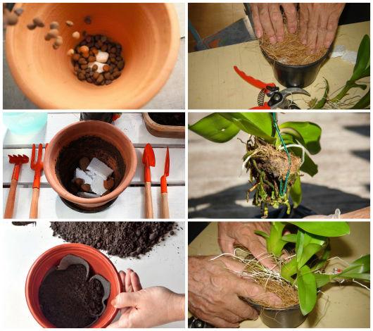como montar vaso para plantio