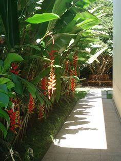 jardim pequeno corredor