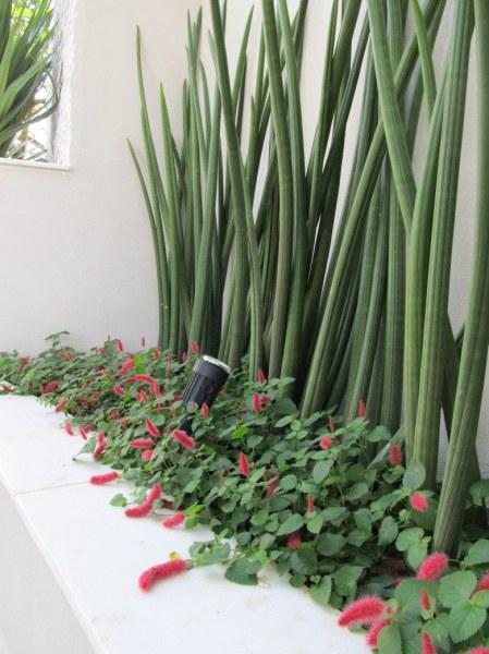 plantas para jardim muito sol:FLORES PARA JARDIM: 9 espécies para área externa