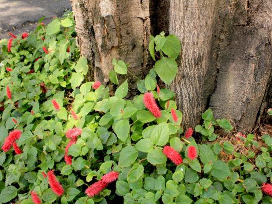 flores de jardim resistente ao solFLORES PARA JARDIM 9 espécies