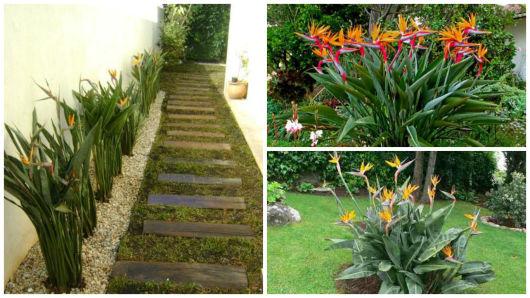 plantas jardim sombra:FLORES PARA JARDIM: 9 espécies para área externa