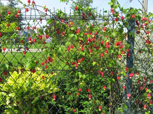 FLORES PARA JARDIM~ Plantio De Rosas Em Jardim