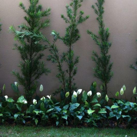 jardim lado muro
