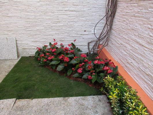 plantas jardim vertical meia sombra : plantas jardim vertical meia sombra:FLORES PARA JARDIM: 9 espécies para área externa