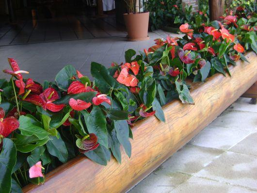 jardineira com flores