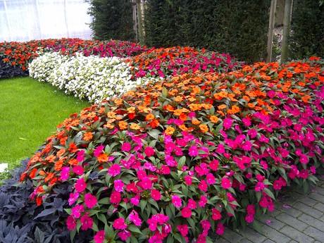 Flores Para Jardim9 Espécies Incríveis 2020