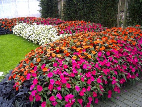Flores Para Jardim 9 Esp Cies Para Rea Externa