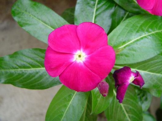 flor jardim pequeno