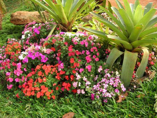 bromélias jardim