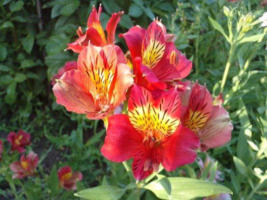 Com todas as dicas de espécies de flores para jardim, agora é só
