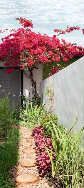 flores para jardim o ano todoFLORES PARA JARDIM 9 espécies para