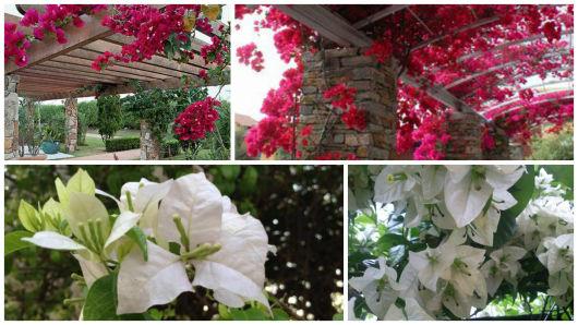 flores jardim primavera:Em meio ao jardim, um caminho com troncos de madeira
