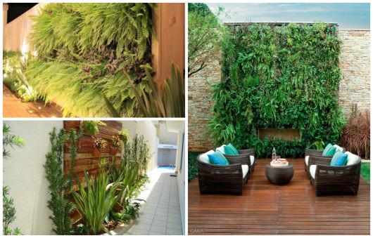 muros e paredes com plantas