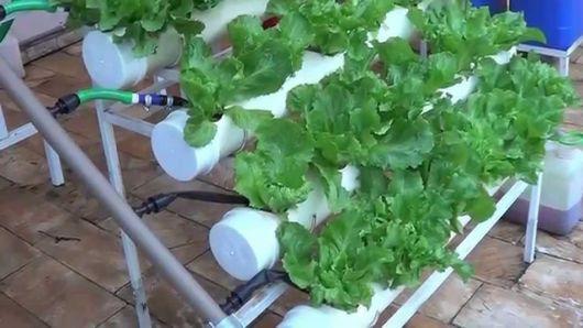 modelo de pvc com irrigação