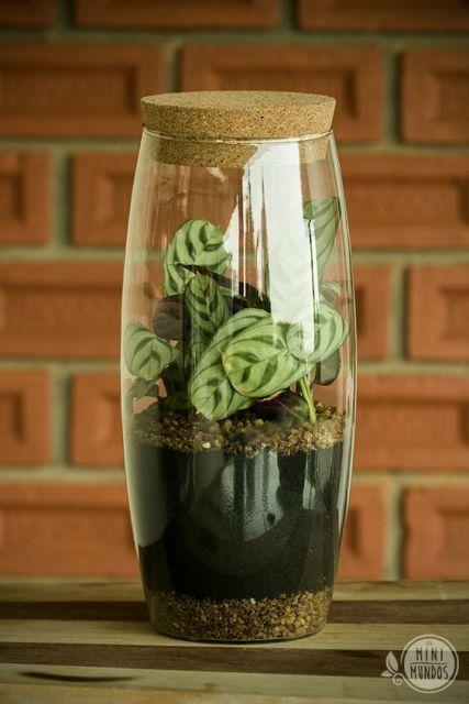 mini jardim de vidro:As camadas de terra e pedras intercaladas decoram o vaso de vidro