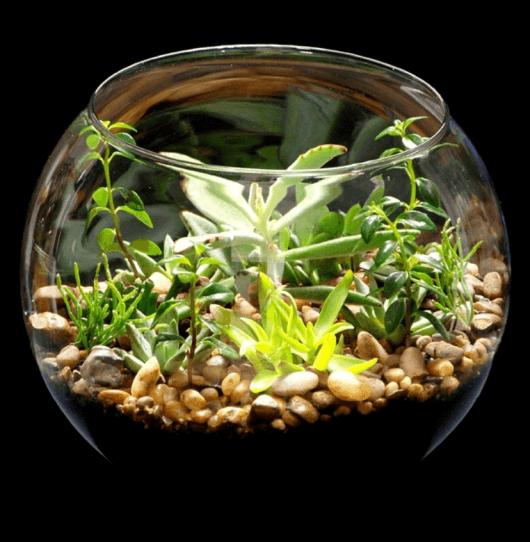 mini jardim terrario : mini jardim terrario:As suculentas são delicadas e fáceis de manter