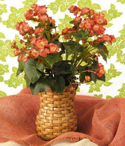 vaso com flor