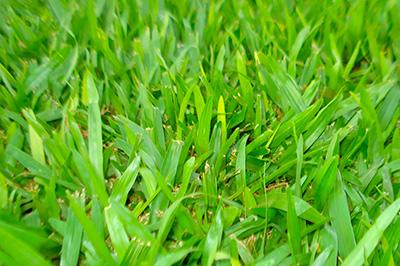 gramado são carlos