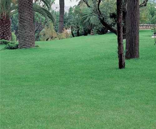 gramado carpete