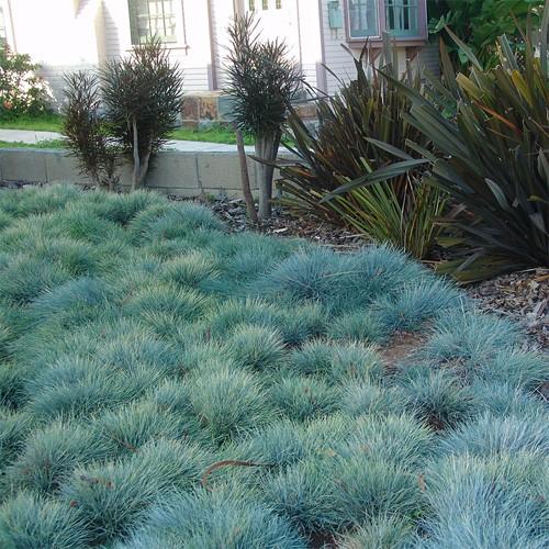gramado azul