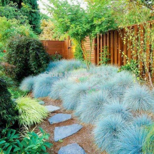 jardim com grama azulada