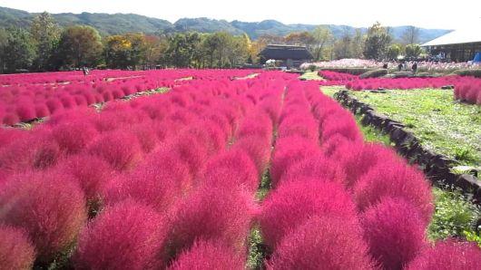 gramado vermelho
