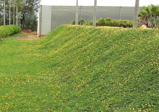 grama com flores